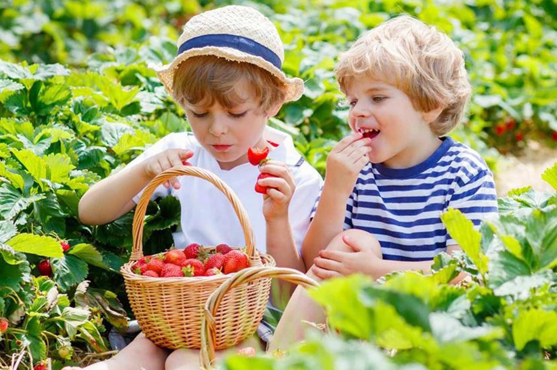 little strawberries cookery school
